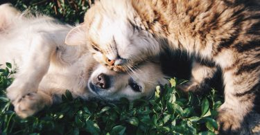 tabby cat and golden retriever snuggle on grass