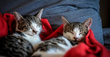 two cats sleeping on bed