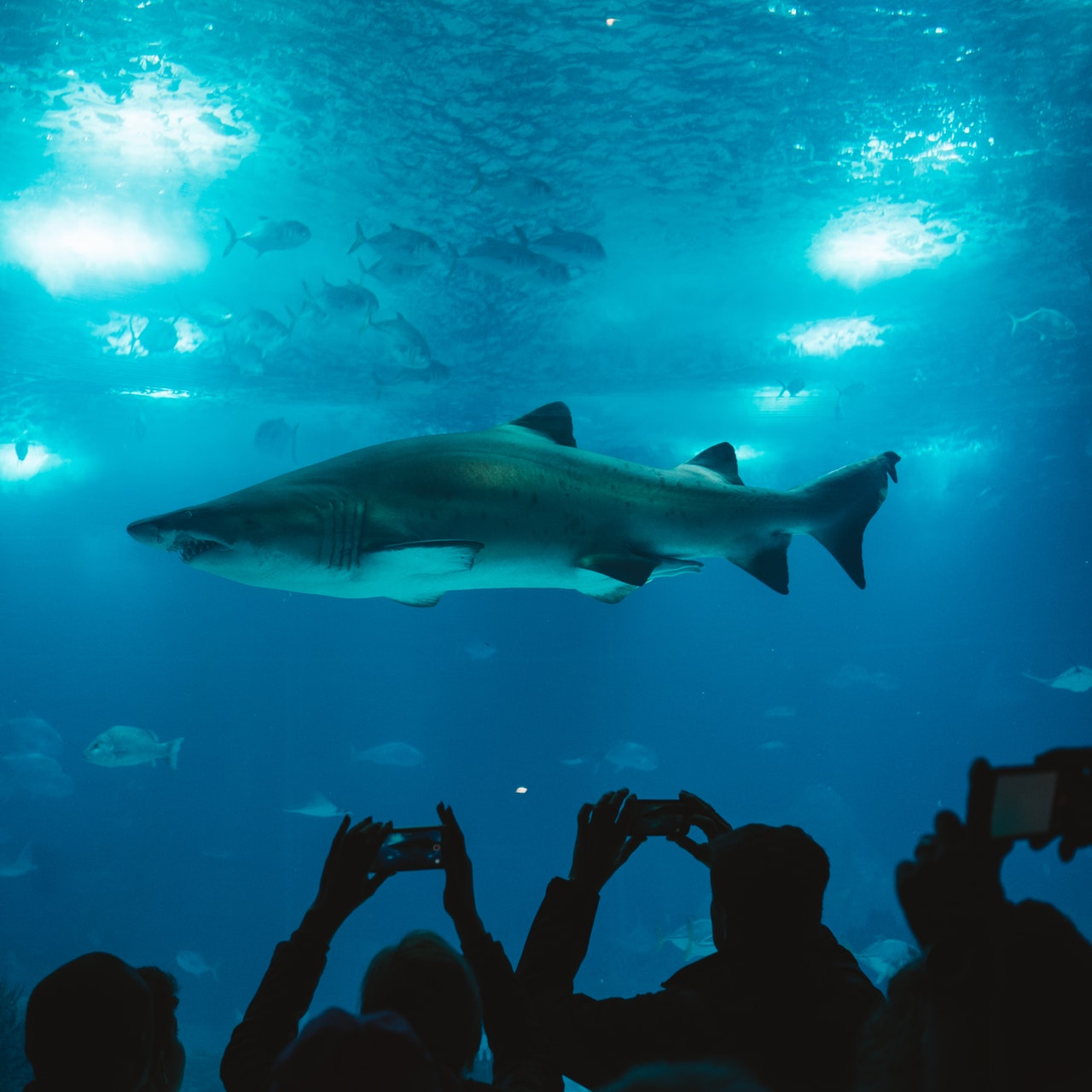 shark-aquarium-aquatic