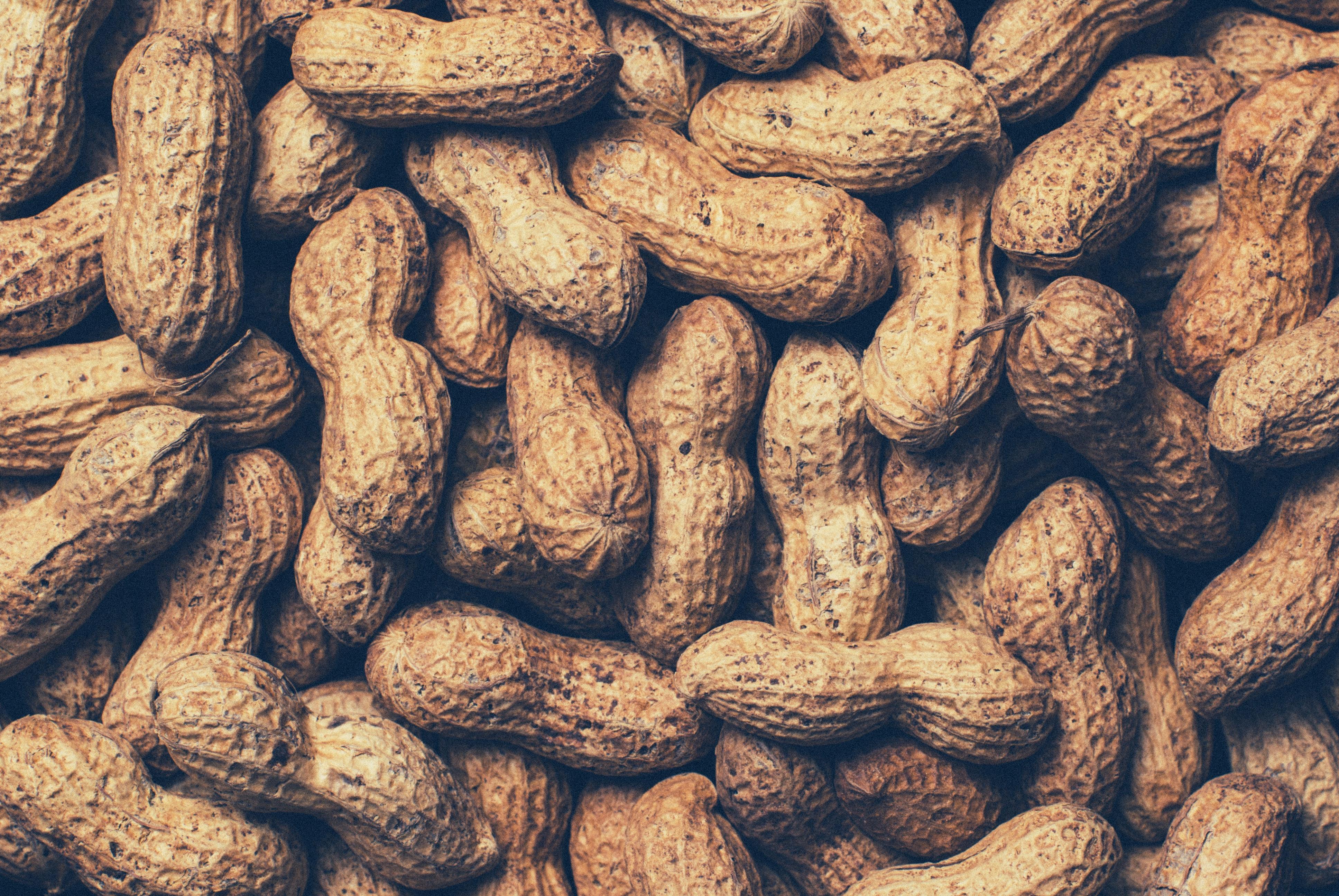 food-nuts